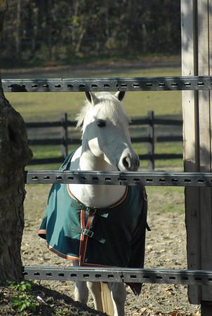 Mya Horse Riding Lessons
