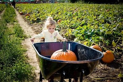 Pumpkin Picking - 2008