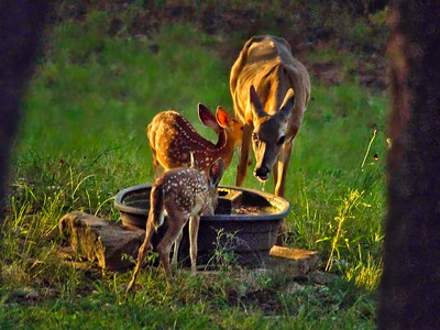 Doe Shows Off Her Twins