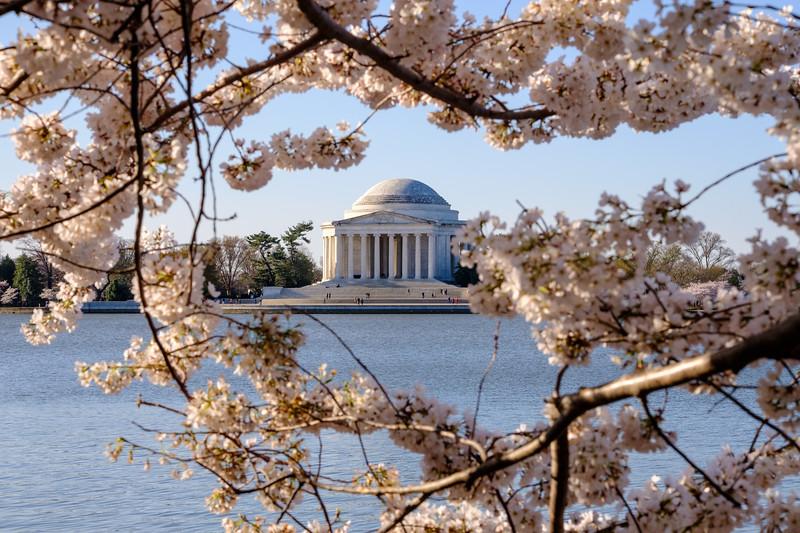 20180408 DC Cherry Blossoms 089.jpg