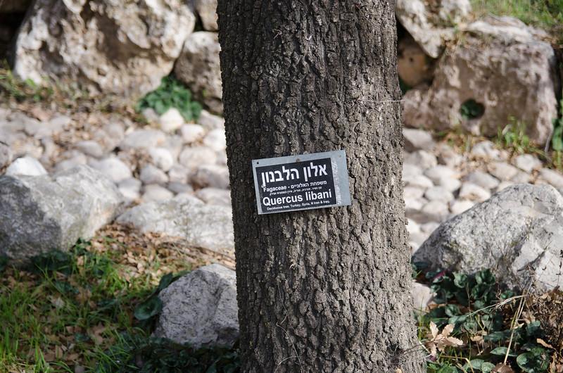 Jerusalem_1600-4003.jpg
