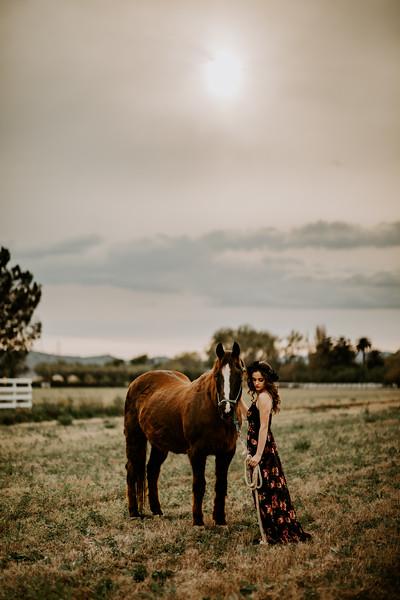 horsey-129.jpg