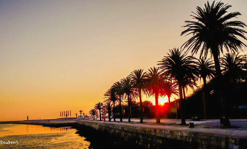 Palms at sunset Porto.jpg