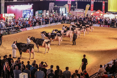 Holstein Production
