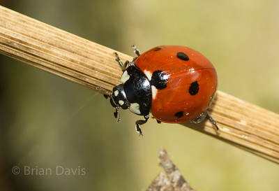 Insects, album 1 (Ladybirds)