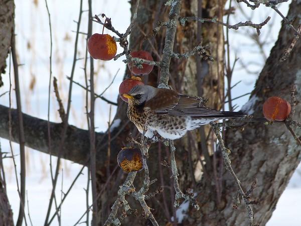 Birds January March 2015