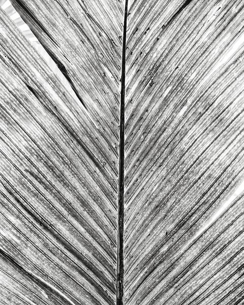 palm-leaf.jpg