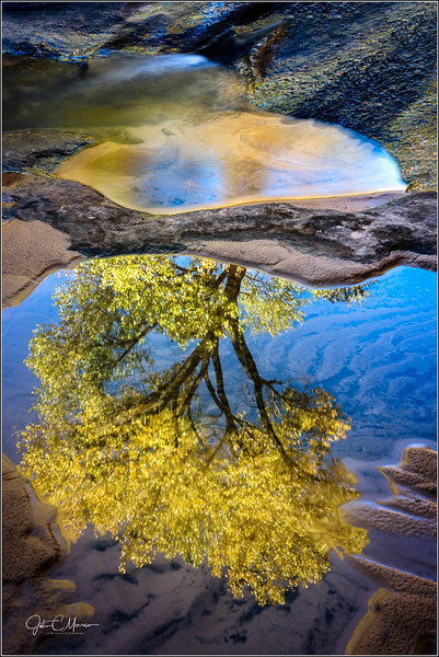 SR3_8811 Tree Reflection LPNW.jpg