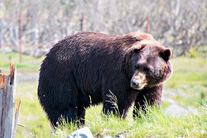 2014 08 18_Alaska_0634_edited-1.jpg