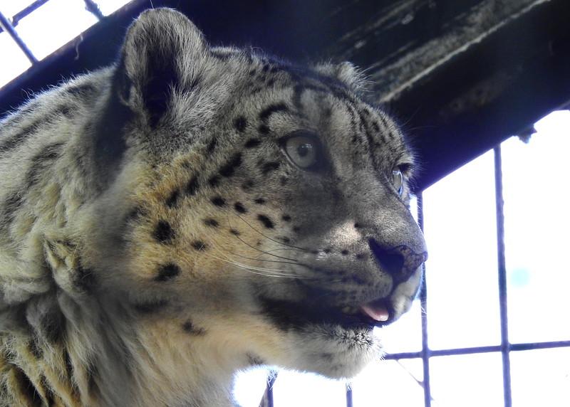 Denver Zoo 2018 (2802).JPG