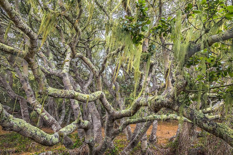 Oaks Moss California Central Coast-9305.jpg