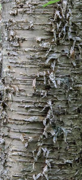bark 062719-4.jpg