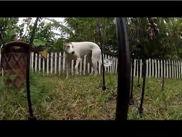 GoPro Test Movie.mp4