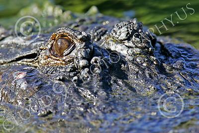 Wildlife Photography Portfolio 3