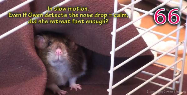 RAT-C for Fear and Aggression in Pet Rats