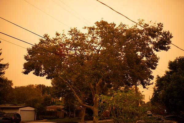 2020 Wildfire Sky - Sunny 16 Test