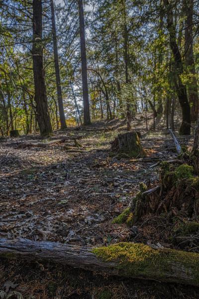 Deep Woods #1