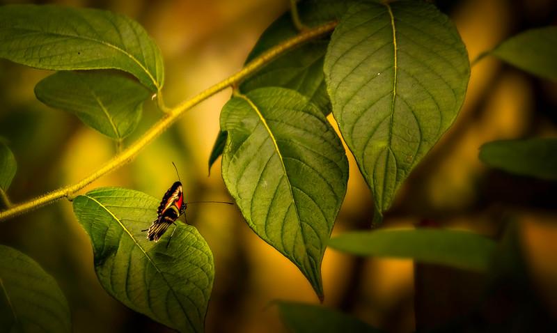 Butterfly-150.jpg
