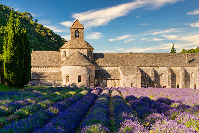 The famous Abbaye Notre-Dame de Sénanque with lavender field in the foreground, Provence, France