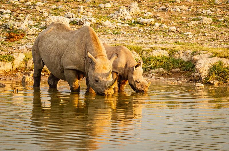 Thirsty rhino 2