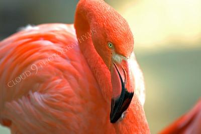 Flamingo Wildlife Photography