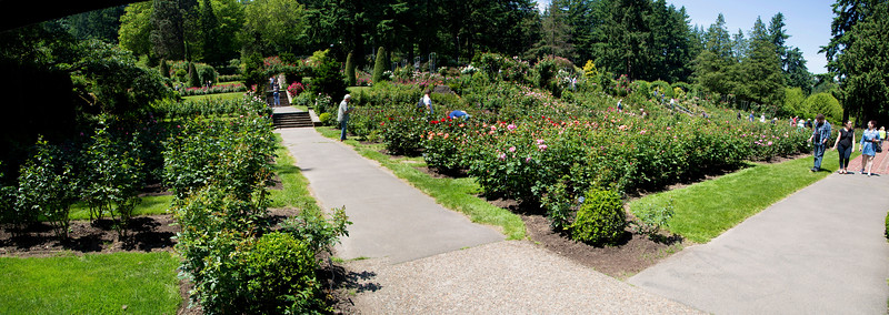 A wide look at the Rose Garden