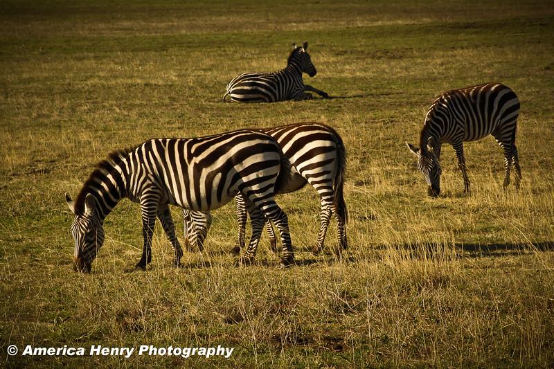 TANZANIA WEB EDITS November 2012 (186 of 732).JPG