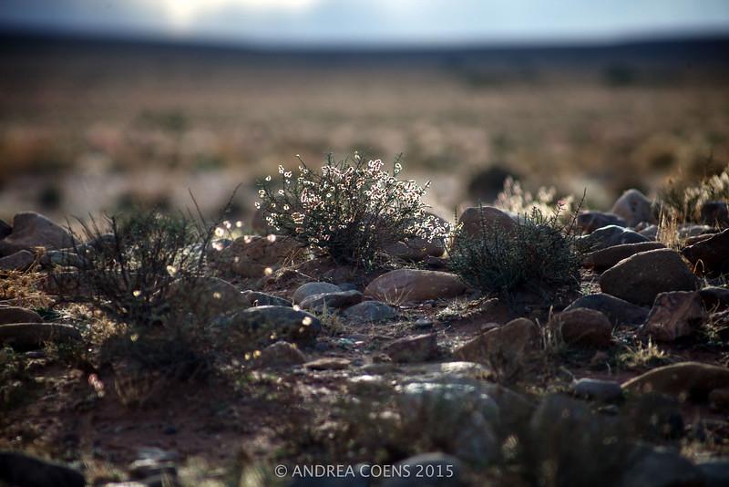 AndreaCoens-137.jpg