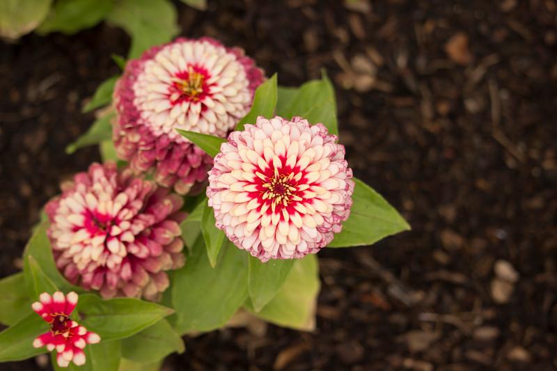 KoRedfield-Floral17.jpg