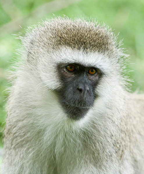 Monkeys-2.jpg