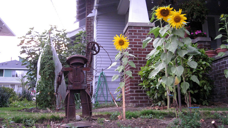 Urban art in someone's house, and my favorite, the Sunflower. Everyone should have a sunflower in their yard.