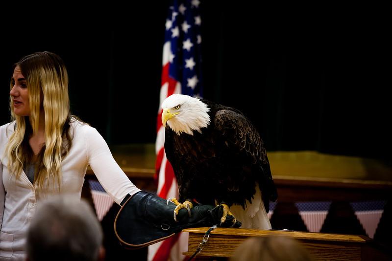 martin eagle-28.jpg