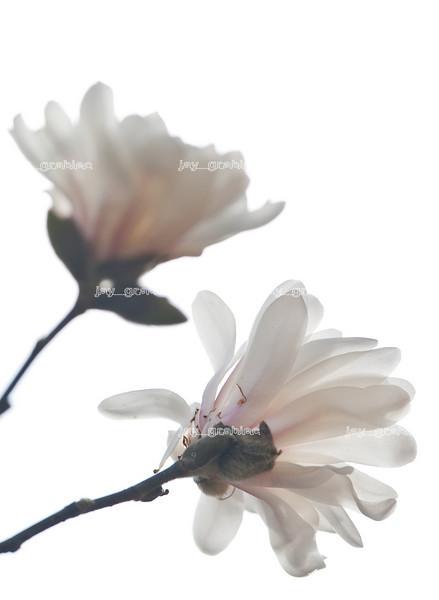 20100329_Flowers15.jpg