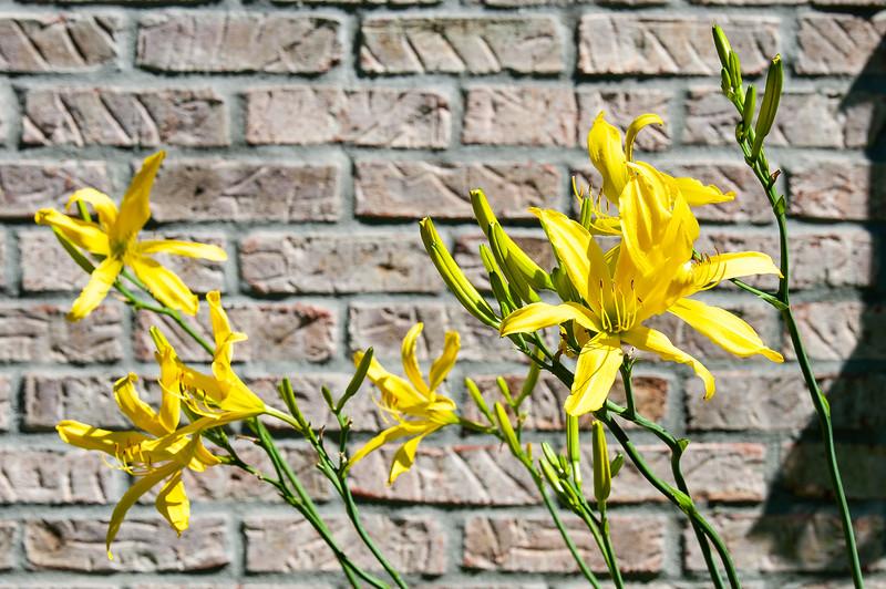 20190714 Daylilies and Flowers-6402.jpg