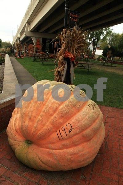 Pumpkin Patch 5635.jpg