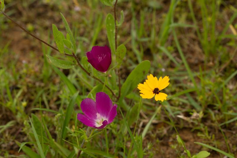 Prairie View 1 May 2020-04896.jpg