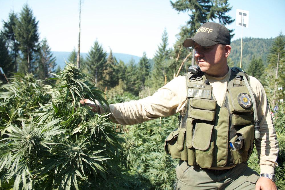 """. \""""Pot Cops\"""" sheriff on the job."""