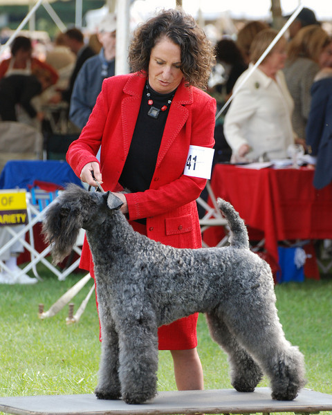 Montgomery County Kennel Club 2008 - Kerry Blue Terrier BOB
