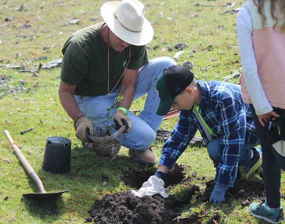 Stewardship : Planting and caring for oaks and native landscapes