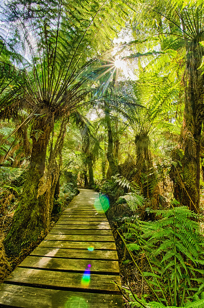 Maites Rest rain forest, Great Ocean Road, Australia