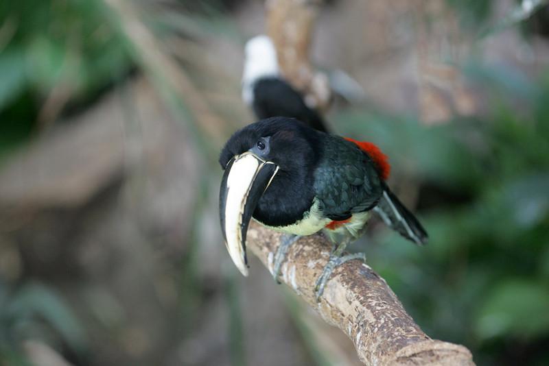 Newquay Zoo 355.jpg