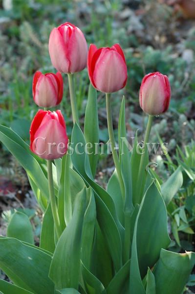 04-28-14 NEWS Spring flowers