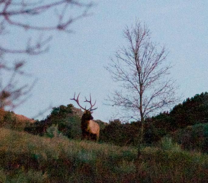 Elk bull sunset Teddy Roosevelt National Park ND IMG_5906.jpg