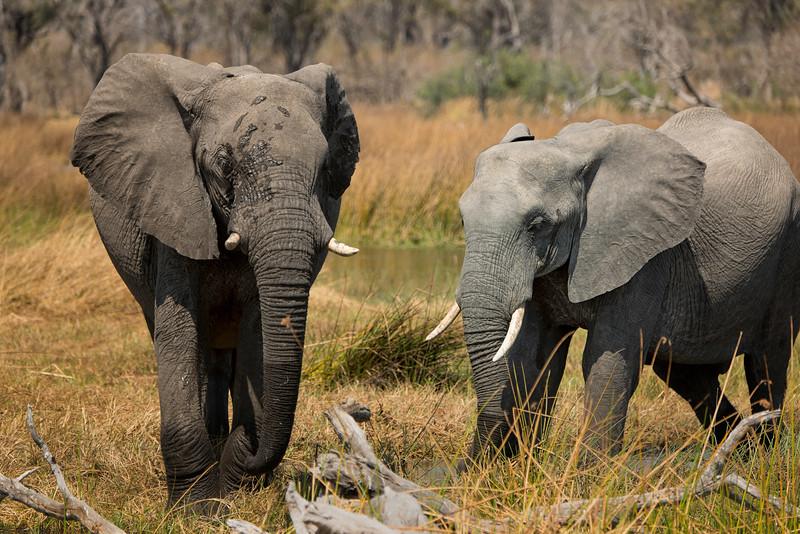 2014-08Aug-Okavango Masters-78-Edit.jpg