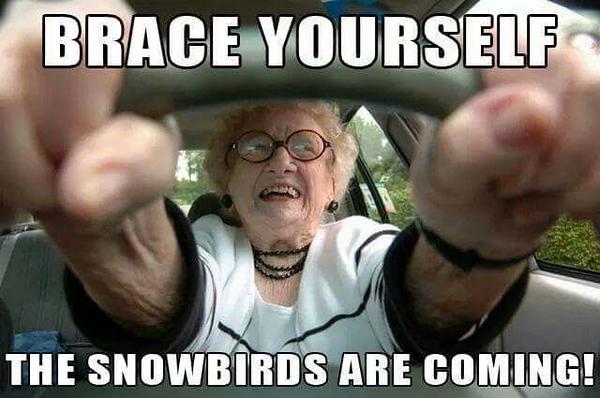 Snowbirds.jpg
