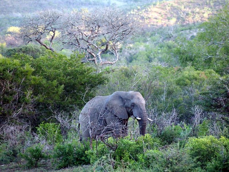 P5046287-lone-elephant.JPG