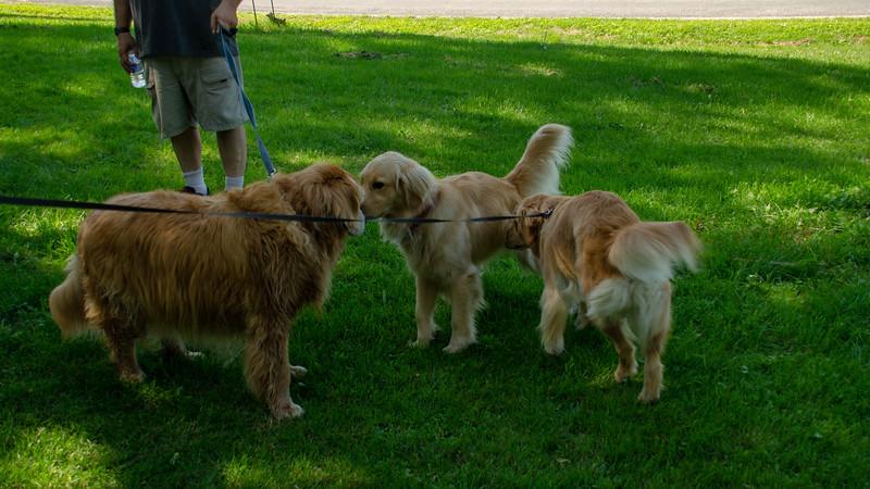 PuppyParty18-524.jpg