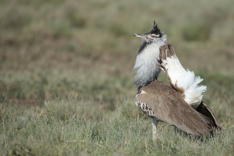 Serengeti_Feb_2013_FH0T4418.tiff.jpg