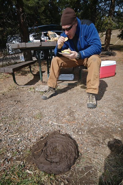 Lunch and bison dung Yellowstone _MG_4277.jpg