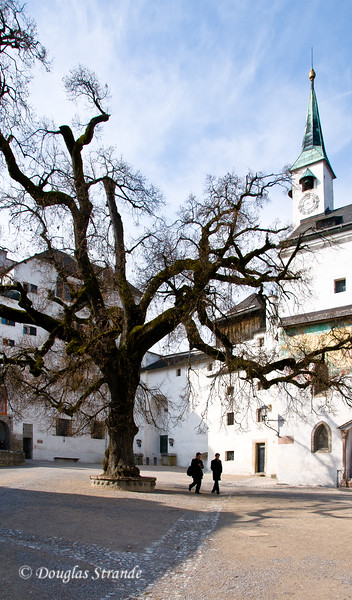Knarled tree in the courtyard at Hohensalzburg Castle